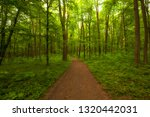 beautiful morning green forest | Shutterstock . vector #1320442031