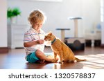 child playing with cat at home. ... | Shutterstock . vector #1320578837