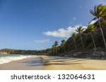 line of Palm trees in a brazilian beach. - stock photo