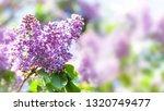 macro view blossoming syringa... | Shutterstock . vector #1320749477