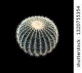 Golden Barrel Cactus. Round...