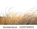 grass and weeds field in the... | Shutterstock . vector #1320763031