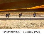 oryx antelope and orange dunes... | Shutterstock . vector #1320821921