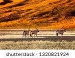 oryx antelope and orange dunes... | Shutterstock . vector #1320821924