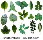 collection of 15 green leaves...   Shutterstock . vector #1321056824
