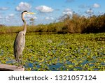 Nature In The Everglades...