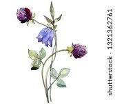 blue campanula and purple... | Shutterstock . vector #1321362761