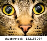 Cats Eyes  Close Up Of A Tabby...