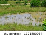 Waterlogging in rice field