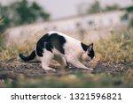 Closeup Cute Cat  Black And...