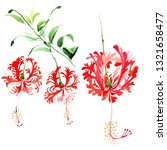red hibiscus chizopelatus... | Shutterstock . vector #1321658477