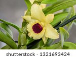 yellow imperial orchid branch... | Shutterstock . vector #1321693424
