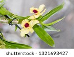 yellow imperial orchid branch... | Shutterstock . vector #1321693427