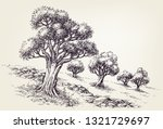olive trees orchard hand drawing | Shutterstock .eps vector #1321729697