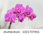 pink orchid branch phal flowers ... | Shutterstock . vector #1321737401