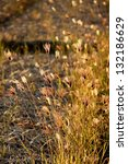 grass flowers on sunset   Shutterstock . vector #132186629
