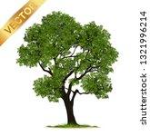 tree  isolated on white... | Shutterstock .eps vector #1321996214