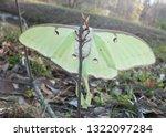 luna moth from the underside ...   Shutterstock . vector #1322097284