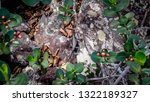 lizard  cold blooded animal... | Shutterstock . vector #1322189327