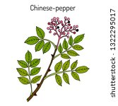 chinese pepper  flatspine... | Shutterstock .eps vector #1322295017