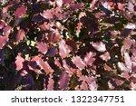 wavy red leafs | Shutterstock . vector #1322347751