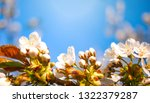 spring nature background with... | Shutterstock . vector #1322379287