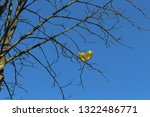 two yellow gold balls... | Shutterstock . vector #1322486771
