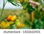 fresh ripe red tomatoes and the ... | Shutterstock . vector #1322622431