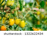 fresh ripe red tomatoes and the ... | Shutterstock . vector #1322622434