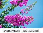 delightful lush flowers in... | Shutterstock . vector #1322639801