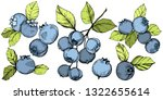 Vector Blueberry Gree And Blue...