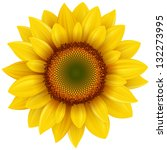 Vector Sunflower  Realistic...