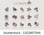 vector icon and logo for nuts... | Shutterstock .eps vector #1322807564