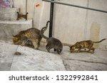 Three Stray Feral Tabby Cats...