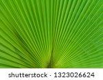 beautiful natural background.... | Shutterstock . vector #1323026624