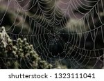 cobweb background. spider web... | Shutterstock . vector #1323111041