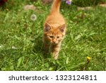 red little kitten playing in... | Shutterstock . vector #1323124811
