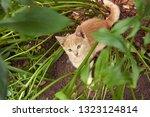 red little kitten in the garden ... | Shutterstock . vector #1323124814
