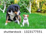 two dogs  big and small dog... | Shutterstock . vector #1323177551