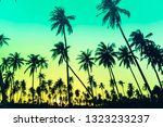 tropical palm coconut trees on... | Shutterstock . vector #1323233237