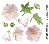 Set Of Pink Mallow Flowers On...