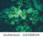 fresh green  leaf pepermint and ... | Shutterstock . vector #1323308144