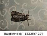 the beautiful giant silk moth...   Shutterstock . vector #1323564224