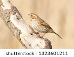 a redwing songbird perched on a ... | Shutterstock . vector #1323601211