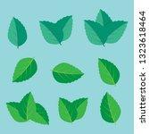 leaf herbal spearmint plant.... | Shutterstock .eps vector #1323618464