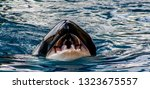 Detail View From A Orca With...