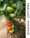 tomatoes tomato vegetable | Shutterstock . vector #1323718964