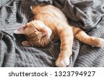 Stock photo cute little ginger kitten sleeping in gray blanket relax time toned photo vintage 1323794927