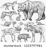 set of wild animals. brown... | Shutterstock .eps vector #1323797981