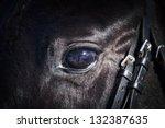 Eye Of A Horse